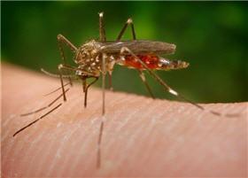 Piqure moustique